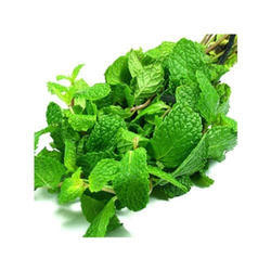 Green Leaf Extract