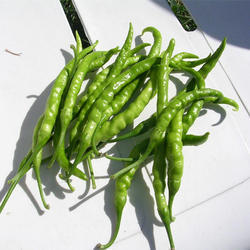Green Chilli Oleoresin