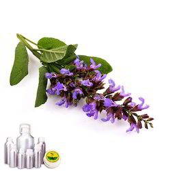 Clary Sage Oil1