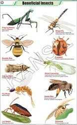 Beneficial Insects For Zoology Chart