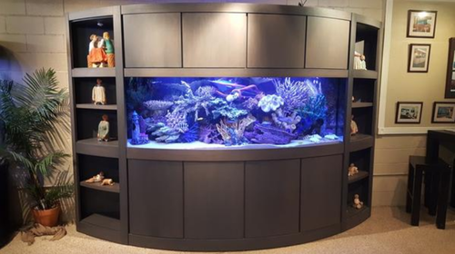 Showroom Aquariums 300 Gallon Bow Front Aquarium