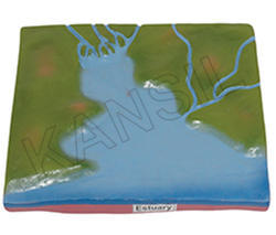 Estuary Model Of Geographical Term