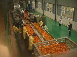 Citrus Juice Processing Plant