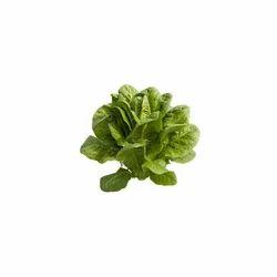 Cos Lettuce Seeds - Tiberius(Romainee)