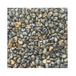Sun Hemp Seeds