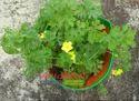 My Own Rooftop Garden