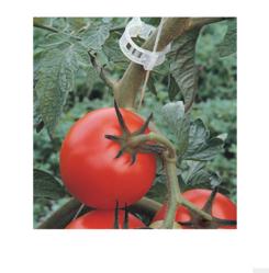 White Tomato Clip ( 23mm)