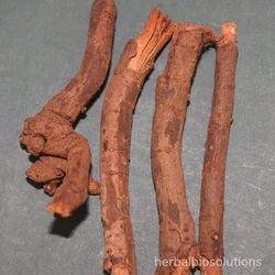 Chitrakmool Extract
