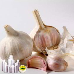 Garlic Co2 Extract Oil