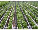 Greenhouse Irrigation System
