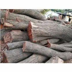 Babul Wood Logs