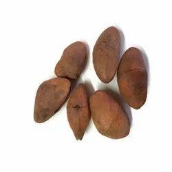 Matras Exporters Natural Thevetia Peruviana Seeds, Packaging Size: 1 Kilogram
