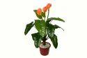 Artificial Calla Lily Plant