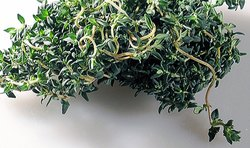 Seeds Thymol(Ajwaine), Garam Masala, Grade Available: Grade A