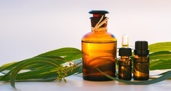 Eucalyptus Natural Essential Oil