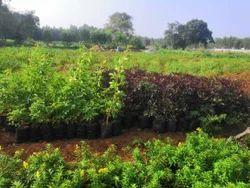 Fresh Plant Nursery