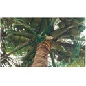 Coconut Fall Protection Net