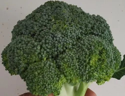 Green Broccoli, Packaging Size Available: 20 Kg