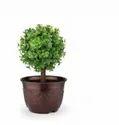 Leafy Pot-12