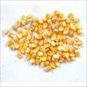 Yellow Organic Maize Seed