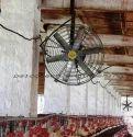Poultry Fans