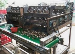 Fully Automatic Cashew Nut Machine