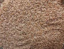 Whole Wheat Khapli