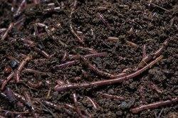 Organic Fertilizer Compost