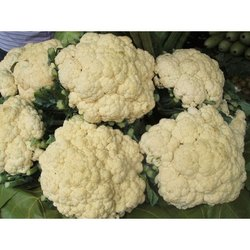 Fresh Cauliflower, Packaging: Gunny Bag