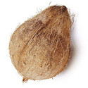 Medium Size Semi Husked Fresh Matured Coconut