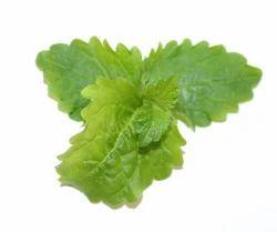 Medicine Grade Antiseptic Herbs