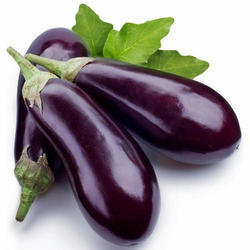 Fresh Brinjal, Packaging: 5 kg