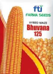 Bhuvana 125 Hybrid Maize Seeds
