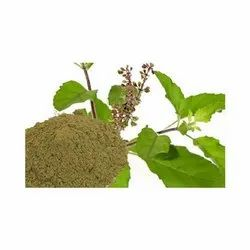 Brown Holy Basil / Ocimum Sanctum Extract, Packaging Size: 25 Kg
