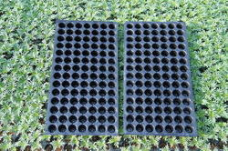 104 Cavities Seedling Tray(Reusable) for Agriculture, 40mm