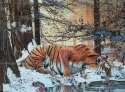 Tiger Wall Photo Tiles
