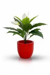 FRP Planter