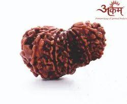 Arkam Garbh Gauri Rudraksha Nepali
