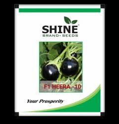 Shine Brand Seeds Hybrid Brinjal Seeds - F1 Heera -10, Pack Size: 1kg