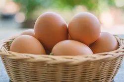 高品质的棕色鸡蛋,包装类型:托盘盒