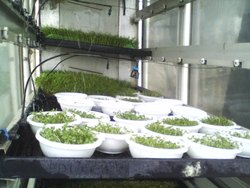EFT-MS-108 Automatic Hydroponic Sprouts Machine