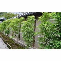 Outdoor Bamboo Garden