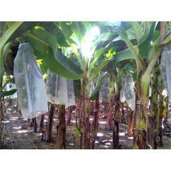 Agriplast Banana Shield Banana Covers
