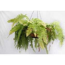 Hanging FRP Fiberglass Planter