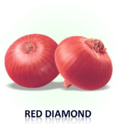 Red Diamond Onion Seeds