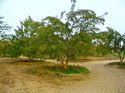 Organic Dry Amla / Gooseberry Dried Fruit Seedless