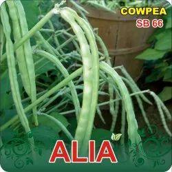 Alia F-1 Hybrid Cowpea Seeds
