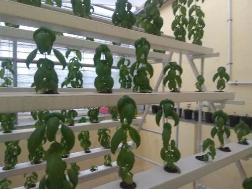 Hydroponics System Equipment Manufacturer & System Executions