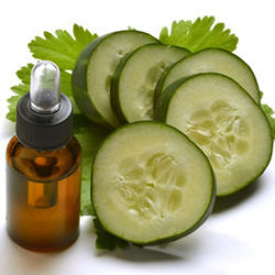 Cucumber Carrier Oil, Packaging: 1 to 180 Liters