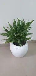 Plants Rental Service